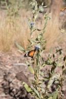 Native Flora at Uluru