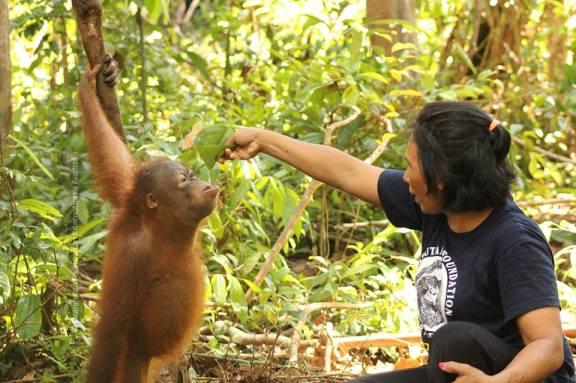 Orangutan4.jpg